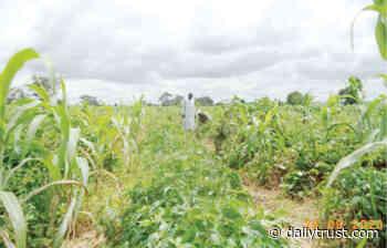Zaria farmers, agro dealers sensitised on substandard fertiliser - Daily Trust