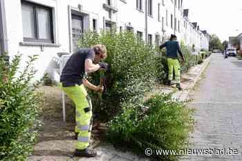 """Hier zijn ze niet te spreken over het werk van de groendienst: """"Konden ze die hagen niet gewoon laten staan?"""""""