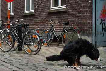 """Zestig hondentoiletten verdwijnen: schepen wil een """"efficiënt beleid rond hondenpoep"""""""