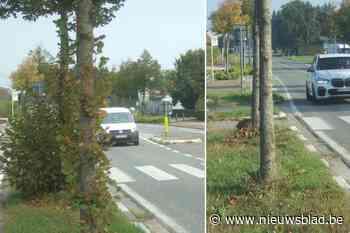 Wegen en Verkeer houdt woord: hinderlijke takken langs N456 meteen gesnoeid
