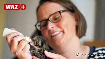 Tierschutz in Herne: Wie ein Verein Katzen in Not rettet - Westdeutsche Allgemeine Zeitung