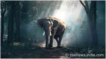 Want to know how many tigers and elephants are in Jharkhand? Wait for three months
