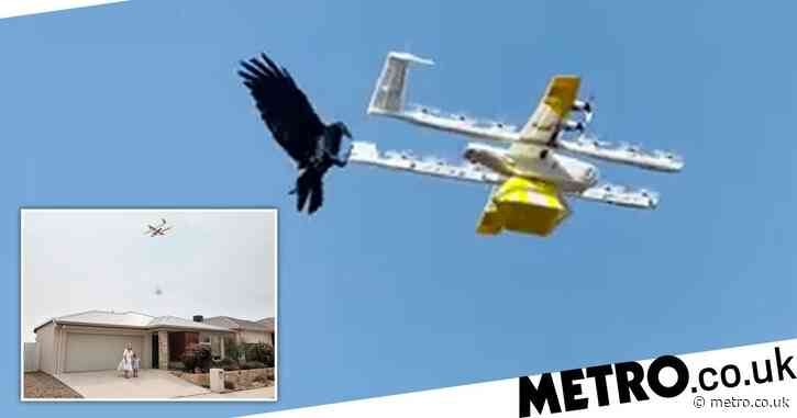 Real life Angry Birds: delivery drones attacked in mid-air by ravens
