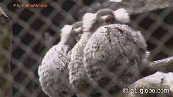 Mantenedouro abriga mais de 400 animais silvestres em Santa Maria - G1