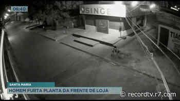 Homem furta planta da frente de loja em Santa Maria - Record TV