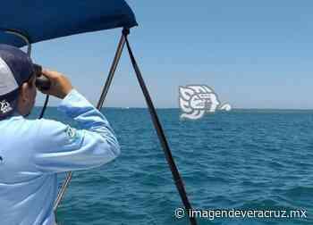 Continúan malas prácticas pesqueras pero son interceptadas en Veracruz - Imagen de Veracruz