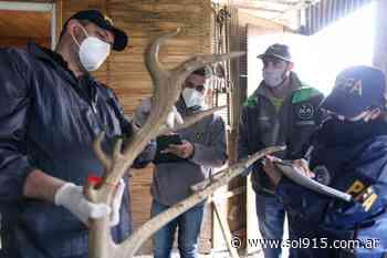 Decomisan productos de fauna silvestre en San Justo y Florencio Varela - SOL 91.5