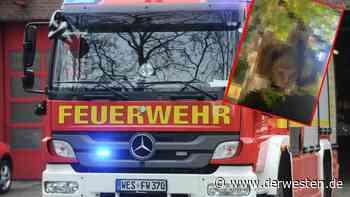 Dortmund: Seltenes Tier verfängt sich in NATO-Stacheldraht - Der Westen