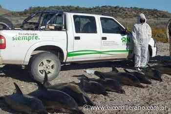Hallaron 15 delfines muertos en la costa de San Antonio Oeste - El Cordillerano