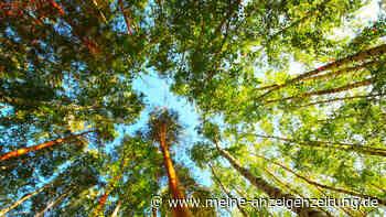 Dachau will Bäume schützen