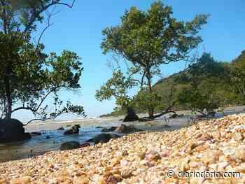 Mangue de Pedra, um ecossistema raríssimo presente no Rio de Janeiro - Diário do Rio de Janeiro