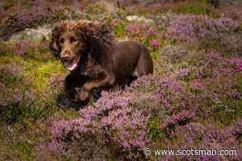Climate change in Scotland: Blood-sucking ticks and voracious heather beetles are on the march – Christine Grahame MSP - The Scotsman