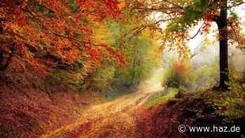 Der Herbst hält Einzug: Sechs Wege, die goldene Jahreszeit lieben zu lernen