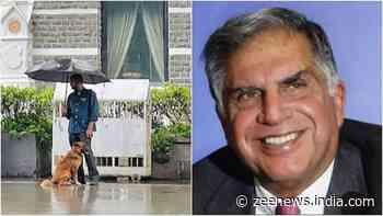 Ratan Tata hails employee for sharing umbrella with stray dog, calls it `heartwarming`