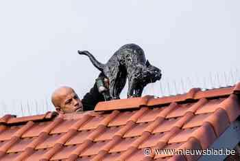 Wat doet die zwarte kat op dat dak?
