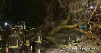 Árbol de 20 metros se desploma en El Rosario, Azcapotzalco - TV Azteca