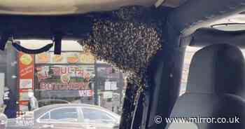 Man returns from buying groceries to find swarm of bees taking over his car