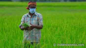 Need to think of 'respectable jobs' for landless and small farm households: NITI Aayog member - The Indian Express