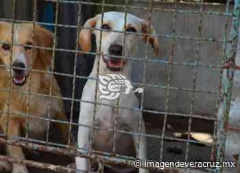 Maltrato, asesinato y crueldad animal serán castigados con cárcel en Veracruz - Imagen de Veracruz
