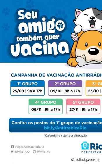 Rio inicia campanha de vacinação antirrábica neste sábado - O Dia