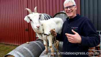 Operating a winery during a pandemic: a new goat helps! - Armidale Express