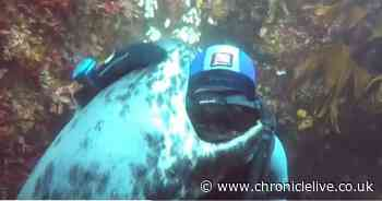 Watch the heart-warming moment a seal hugs a scuba diver off Northumberland Coast