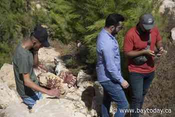 Israeli troops kill 5 Palestinians in West Bank gunbattles