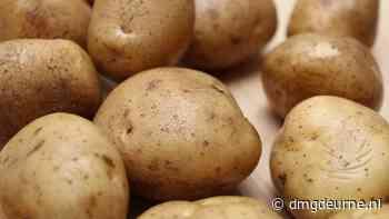 Pottenbakkers brengen nieuwe aardappels aan de deur in Zeilberg - DMG Deurne