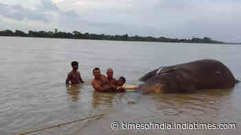 Odisha: Trapped tusker dies in Mahanadi river