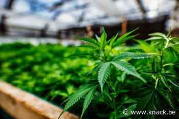 Nederlandse burgemeesters: 'Criminelen droogleggen door softdrugs te legaliseren'