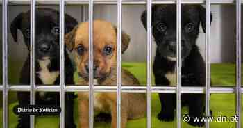 CROA do Porto já deu casa a mais de 500 cães e gatos. Mas é preciso mais - Diário de Notícias - Lisboa