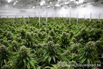 Fransman (19) in Gentbrugge betrapt met 504 cannabisplanten in zijn wagen