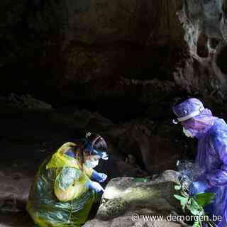 Waar komt het coronavirus vandaan? Wetenschappers vinden sporen in Laos