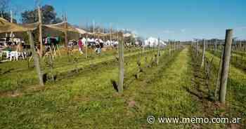 Siete bodegas que ratifican el potencial vitivinícola de Provincia de Buenos Aires - Memo