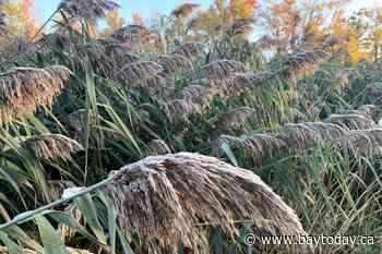Seasons first frost advisory