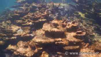 Especialistas investigan afectaciones en el arrecife Ixlaché de Isla Mujeres - PorEsto