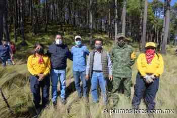 Participa Ayuntamiento de Xalapa en reforestación - plumas libres