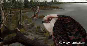 Fossil of fearsome eagle from 25 million years ago found in stunning condition     - CNET