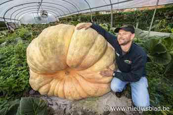 """Mario (48) is goed op weg om de zwaarste pompoen ter wereld af te leveren: """"Nu al meer dan 1.000 kilo"""""""