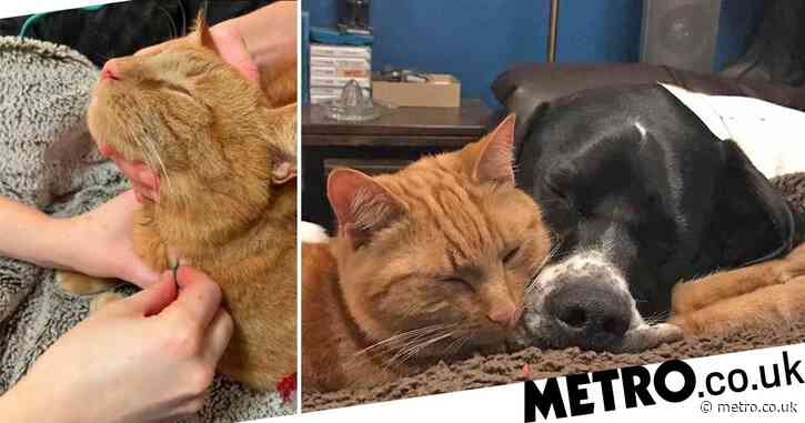 Hero cat and dog are regular blood donors to help other pets in need