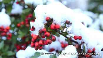 Immergrüne Pflanzen: Highlights für Ihren winterlichen Garten