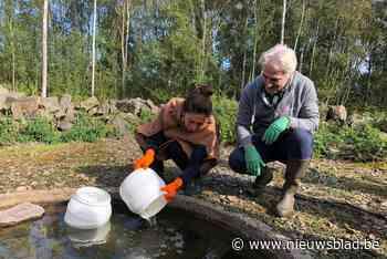 Deze bijzondere maar bedreigde pad wordt een handje geholpen: dankzij kweekprogramma al 1.200 beestjes erbij