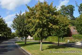 Stad schenkt gratis boom aan inwoners (Deinze) - Het Nieuwsblad