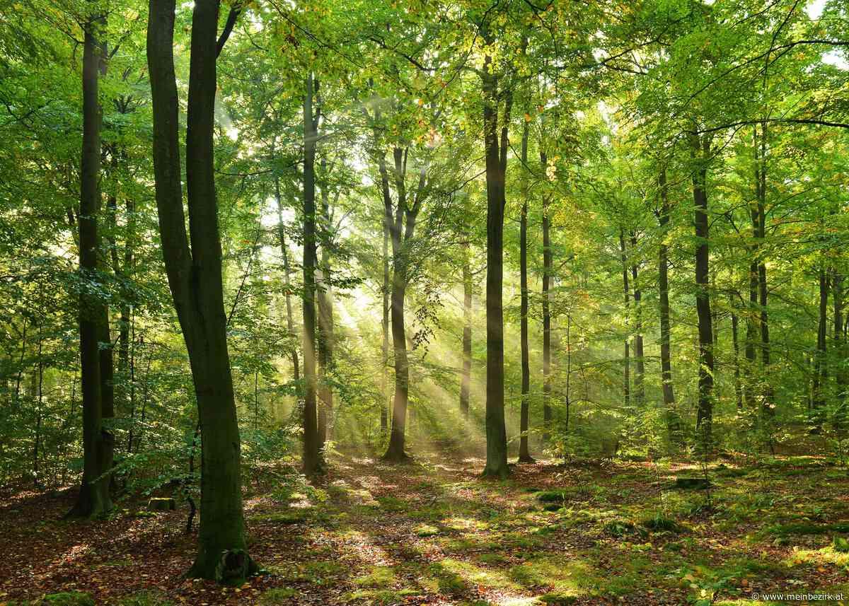"""""""Shinrin-yoku"""": Waldbaden ist Balsam für die Seele - meinbezirk.at"""
