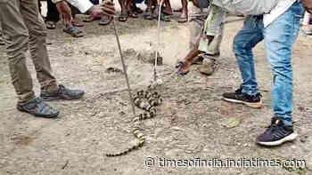 Odisha: Snake stuck in fishing net, rescued