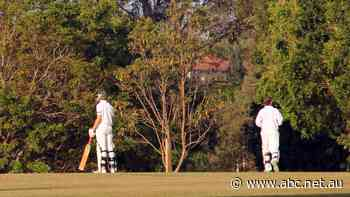 Victorian cricket clubs stumped for seniors as season delayed