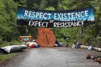 B.C. judge denies injunction extension over Fairy Creek logging