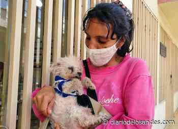 20 animales de Boconó necesitan apadrinamiento para esterilizarse - Diario de Los Andes