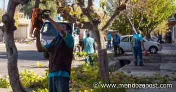 Así avanzan en Ciudad los trabajos de arbolado, bacheo y asfaltado - mendozapost.com