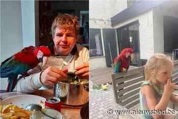 """Vincent (35) heeft 1.000 euro veil voor tip over vermiste papegaai: """"De onzekerheid over het lot van Rio knaagt enorm aan ons"""""""